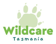 Wildcare Incorporated