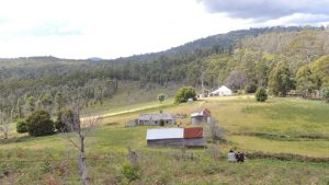Eastern view Woodvine