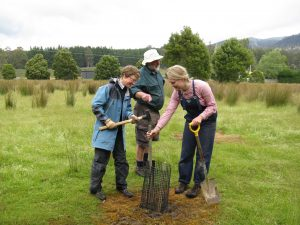 Sabine, Adrian and Maraika adding a stake Tyenna River site 2