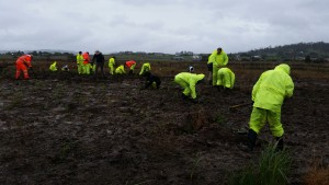 Plants, willing workers, mud, rain