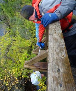 Collecting Rubbish under Boardwalk, Ballroom Forest