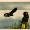 Tasman Island Card