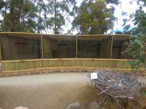 RaptorRefugeAviaries20180217_113506